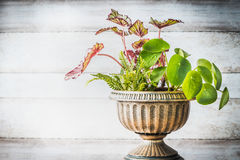 Beautiful patio urn planter with various plants at white wooden wall background, front view. Florist and Container gardening conce Stock Images