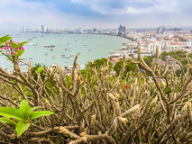 Beautiful of Pattaya bay view on Pratamnak Hill with blue sky ba Stock Images