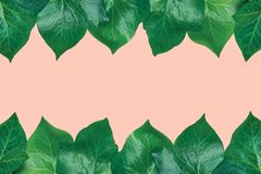 Beautiful pattern from fresh green ivy leaves arranged in top and bottom border frame on light pink background. Banner Poster. Announcement Template. Spa stock image