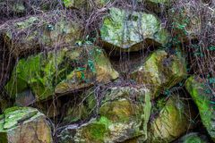 Beautiful pattern of large rocks covered in green moss and plants, natural background. A beautiful pattern of large rocks covered in green moss and plants royalty free stock photography