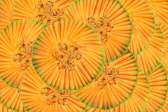 Beautiful pattern with muskmelon Royalty Free Stock Images