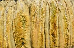 Beautiful pattern of wet limestone Stock Photo
