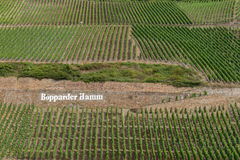 Beautiful Patterns created by Vineyards on slopes of  Bopparder Hamm over the Rhine Valley, Germany Stock Image