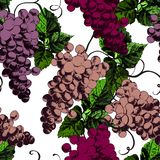 Beautiful pattren with grapes Stock Photo