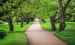 Beautiful peaceful alley in spring sunny park with trees and gre Royalty Free Stock Image