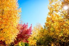 Beautiful peaceful autumn scene in Mount Lofty. Beautiful peaceful autumn scene in the park with sun shining through tree branches stock photo