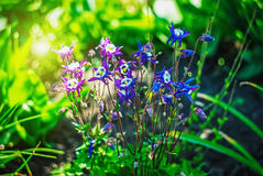 Beautiful and peaceful bright close up photo of plants and flowers with carefully landscaping. Stock Images