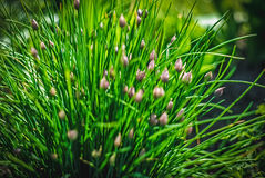 Beautiful and peaceful bright close up photo of plants and flowers with carefully landscaping. Royalty Free Stock Images