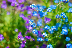 Beautiful and peaceful bright close up photo of plants and flowers with carefully landscaping. Royalty Free Stock Photos