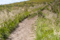 Path in mountains in Poland - Bieszczady. Beautiful, peaceful, green mountains in Poland - Bieszczady during summer Royalty Free Stock Photos