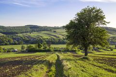 Beautiful peaceful spring wide panorama of green fields stretching to horizon under clear bright blue sky with big green tree on. Distant hills and village royalty free stock image
