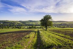 Beautiful peaceful spring wide panorama of green fields stretching to horizon under clear bright blue sky with big green tree on d. Istant hills and village stock photo