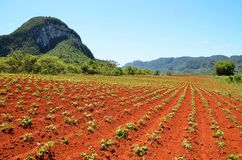 Beautiful  and peaceful Vinales valley, Cuba Stock Photos