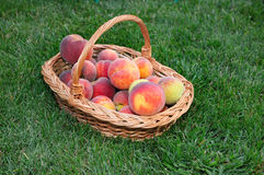 Beautiful of peaches basket Stock Photo