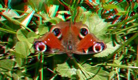 3D anaglyph. Beautiful peacock butterfly royalty free stock photography