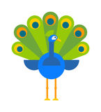 Beautiful peacock colorful blue beautiful nature bird and wildlife bright tropical peafowl flat vector. Royalty Free Stock Image