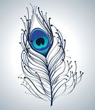 Beautiful peacock feather Stock Images