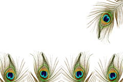 Beautiful peacock feather as background with text space. Beautiful peacock feather as background for web design art craft banner vector illustration