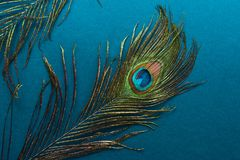 beautiful peacock feather on blue background Royalty Free Stock Photo