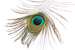Beautiful peacock feather on white Stock Photo