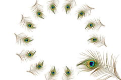 Beautiful peacock feathers as background with text copy space Royalty Free Stock Photography