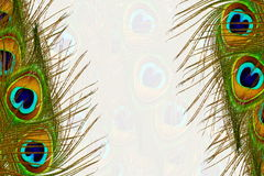 Beautiful peacock feathers as background with text copy space. For web design art card banner and other background stock illustration