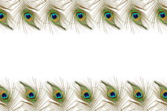 Beautiful peacock feathers as background with text copy space. For web design art craft banner nature holiday romance related Royalty Free Stock Images