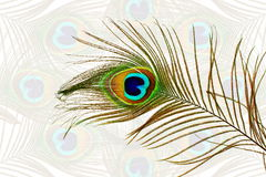 Beautiful peacock feathers as background with text copy space. For web design art craft banner nature holiday romance related stock illustration