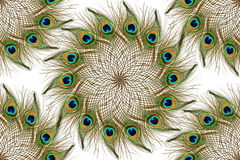 Beautiful peacock feathers as background Stock Images
