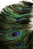 Beautiful Peacock Feathers Background Stock Photos