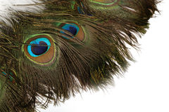 Beautiful Peacock Feathers Background Stock Images