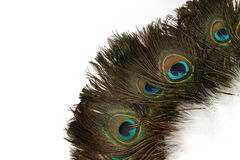 Beautiful Peacock Feathers Background Royalty Free Stock Photography