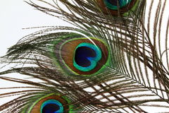 Beautiful peacock feathers on white background Royalty Free Stock Photography