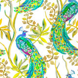 Beautiful peacock pattern. Tropical seamless Royalty Free Stock Images