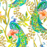 Beautiful peacock pattern. Vector. Peacocks and plants, tropical flowers,hibiscus . Royalty Free Stock Photos