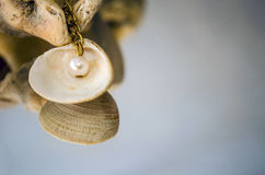 Beautiful pearl on chain Royalty Free Stock Photo