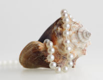 Beautiful pearl necklace and shell. Pretty pearl necklace sea shell fashion jewelry Royalty Free Stock Images