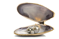 Beautiful pearls in a seashell Stock Photography
