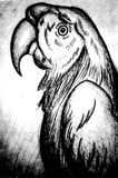 Drawing of a parrot in black and white vector illustration