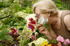 Beautiful pensioner woman florist in face mask take care of pot plants