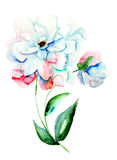 Beautiful Peonies flowers. Watercolor painting Stock Images