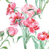 Beautiful Peonies flowers, Watercolor painting seamless pattern. Vector Royalty Free Stock Images