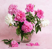 Beautiful peonies in a glass vase Royalty Free Stock Photography