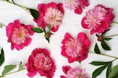 Floral arrangement of peonies Royalty Free Stock Photos