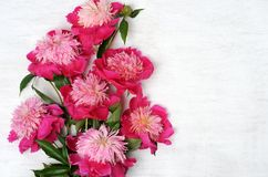 Floral arrangement of peonies Royalty Free Stock Photo