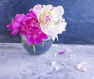 Beautiful natural blossom peony summer bouquet composition vase birthday on gray concrete royalty free stock photos