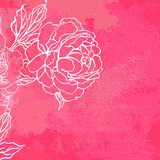 Beautiful peony bouquet design on a pink background Stock Image