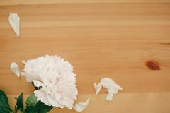 Beautiful peony flat lay on rustic wooden table with space for text. Happy mothers day greeting card mockup. International Women` royalty free stock images