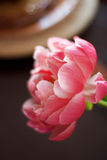 Beautiful peony Stock Photos