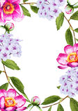 Beautiful Peony flower watercolor frame Stock Images